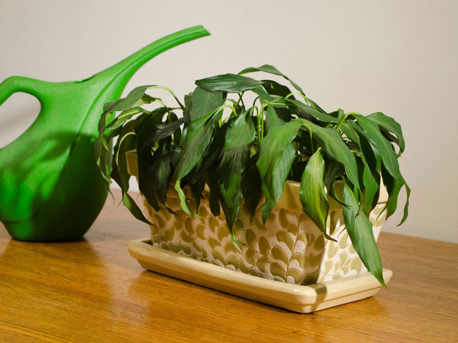 Is Your Plant Dying1